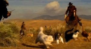 cat herding
